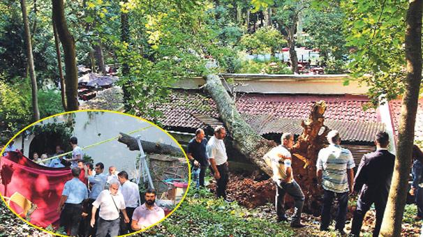 Beykoz'da ağaç devrildi! 3 kadın öldü