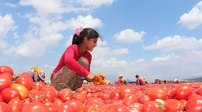 Çocuklar güvende değil: 18 bini istismara uğradı, 2 milyon çocuk çalıştırılıyor